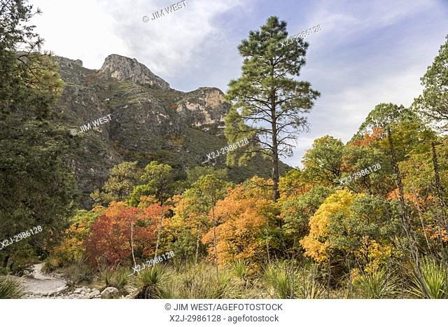 Guadalupe Mountains National Park, Texas - Fall colors in McKittrick Canyon