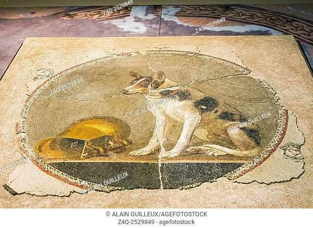 Egypt, Alexandria, Bibliotheca Alexandrina, Archeological Museum, Ptolemaic mosaic displaying a foolish dog and its reversed cup