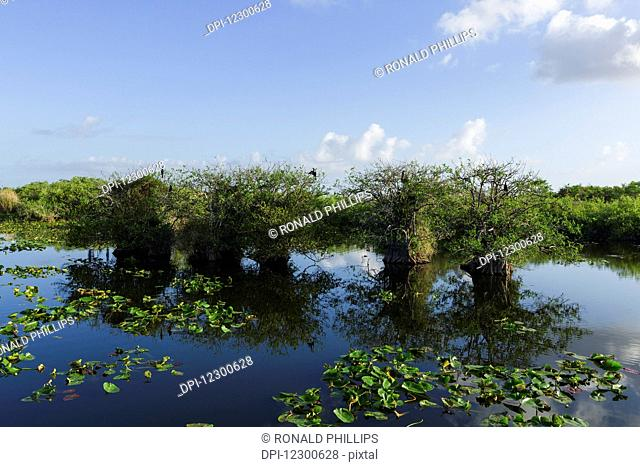 Taylor Slough, Everglades National Park; Florida, United States of America