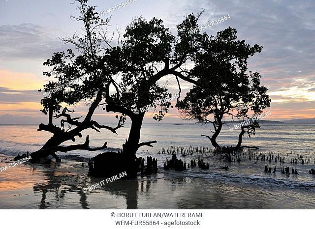 Mangroves at High Tide, Pantar, Alor Archipelago, Indonesia