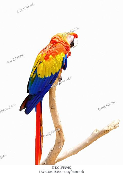 Sun Conure Parrot on a Tree Branch, spain
