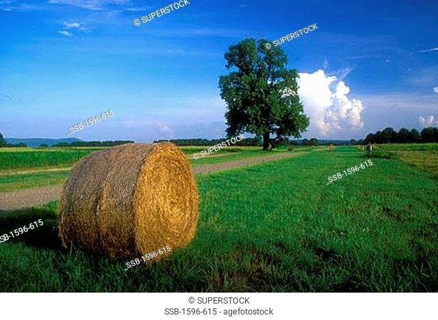 Hay bale in a field, Holla Bend National Wildlife Refuge, Dardanelle, Arkansas, USA