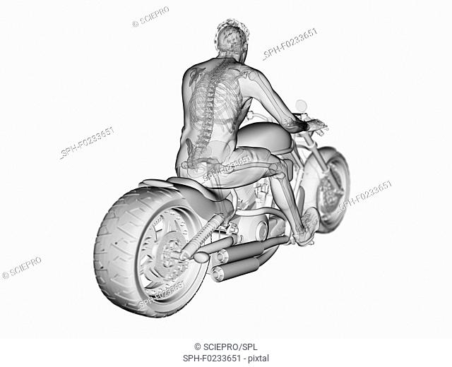 Illustration of a biker's skeleton