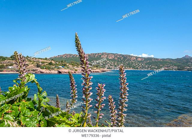 Coastal landscape, Antheor, Var, Provence-Alpes-Cote d`Azur, France, Europe