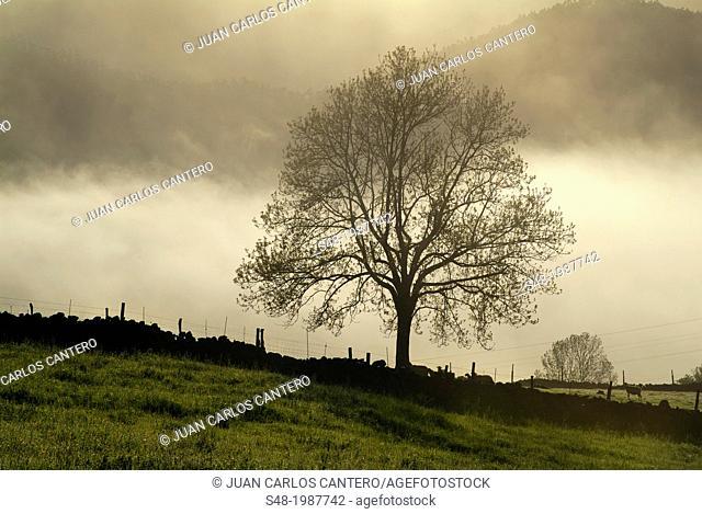 Rural landscape in Ramales de la Victoria, Cantabria, Spain