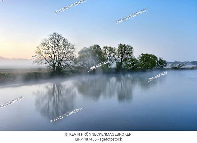 Trees in the fog on the shore at dawn, river trough, Middle Elbe Biosphere Reserve, Dessau, Saxony-Anhalt, Germany