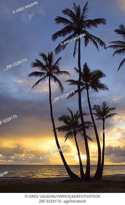 Sunrise and coconut palm trees at Punalu'u Beach Park, Windward Oahu, Hawaii