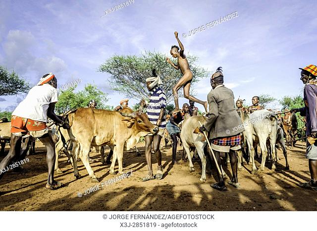 Gathering the cattle for a bull jumping ceremony. A rite of passage from boys to men from the Hamer tribe