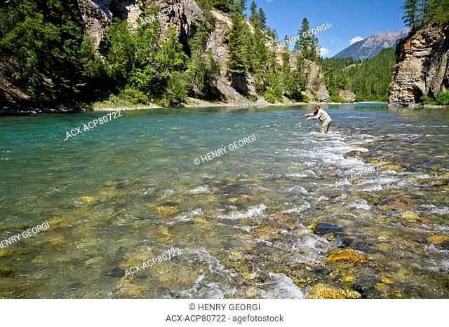 Middle-aged man fly-fishing on Bull river, East Kootenays, BC, Canada