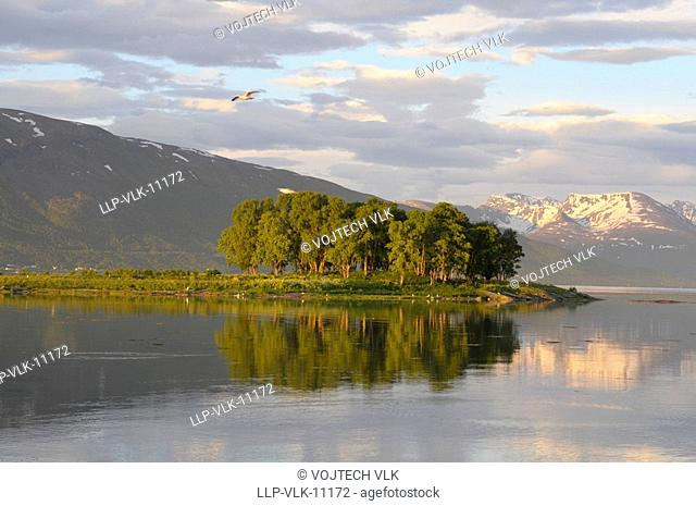 The reflection of trees in undisturbed sea surface and snowy mountains on background