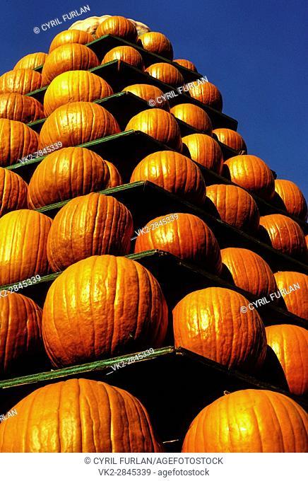 Pumpkin Display at a country fair