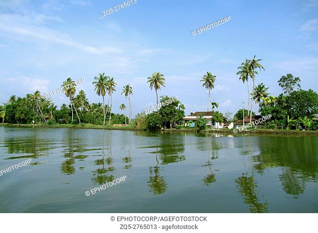 Village river bank with coconut trees. Kerala backwaters, India