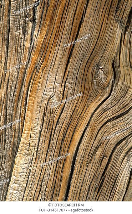 washington, patterns, tree, larch, western, wood