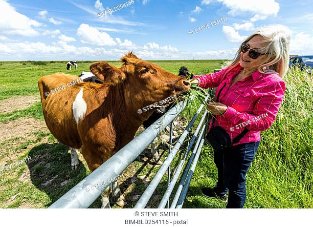 Caucasian woman feeding cow