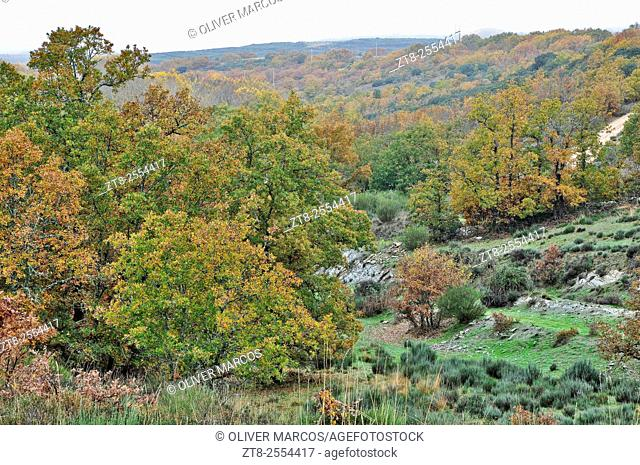 "Northwest Spain is characterized by an extremely complex climate, usually very cold or very hot, there are valleys where microclimates, such as """"El Bierzo"""""