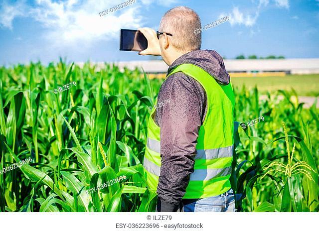 Farmer near the corn field with tablet PC