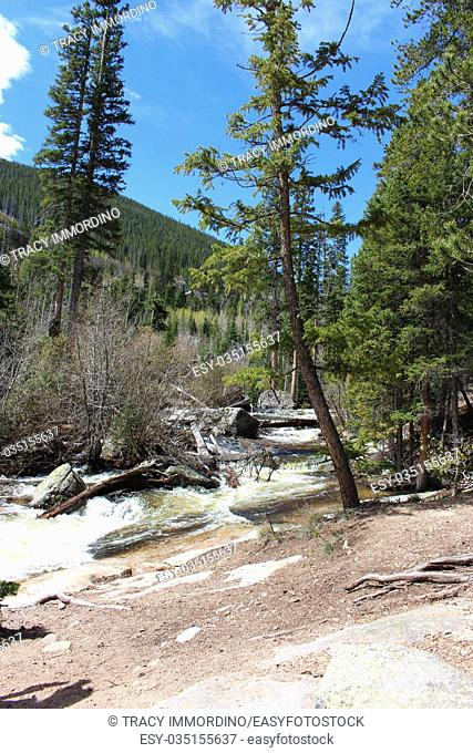 Alongside the rapidly flowing North Saint Vrain Creek on the Wild Basin Trail in Rocky Mountain National Park, Colorado, USA