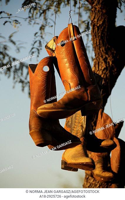 Old cowboy boots hang from a tree, Green Valley, Arizona, USA