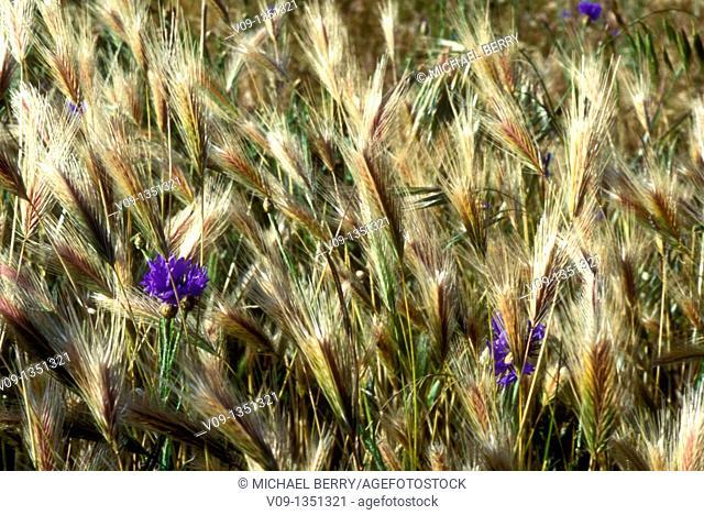 Windy Spring Flowers