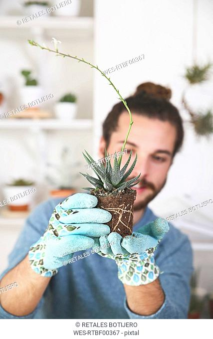 Young man checking the roots of a succulent plant