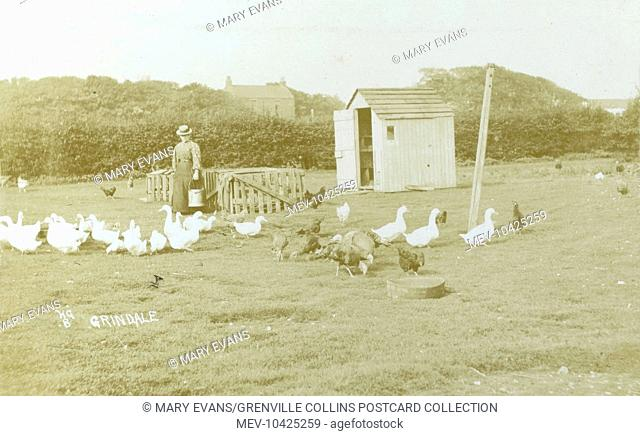 Keeping poultry at Grindale, Yorkshire