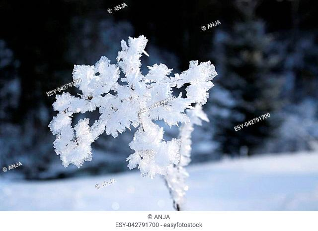 beautiful flower with frozen ice crystals