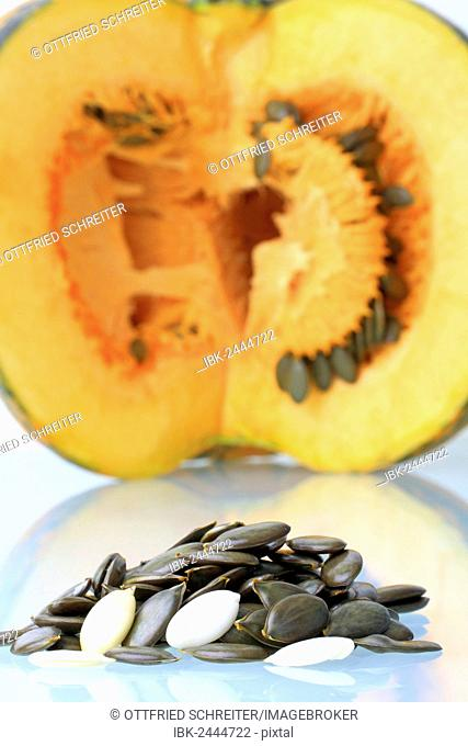 Seeds and pulp from the Styrian Oil Pumpkin