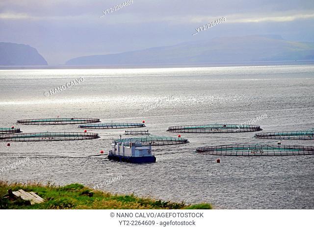 Salmon farm in The Faroe Islands