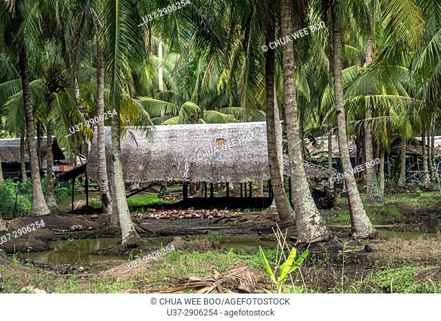Scenery of coconut plantation along Singkawang-Aruk road, West Kalimantan, Indonesia