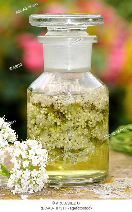 Common Valerian blossom tincture, Valeriana officinalis