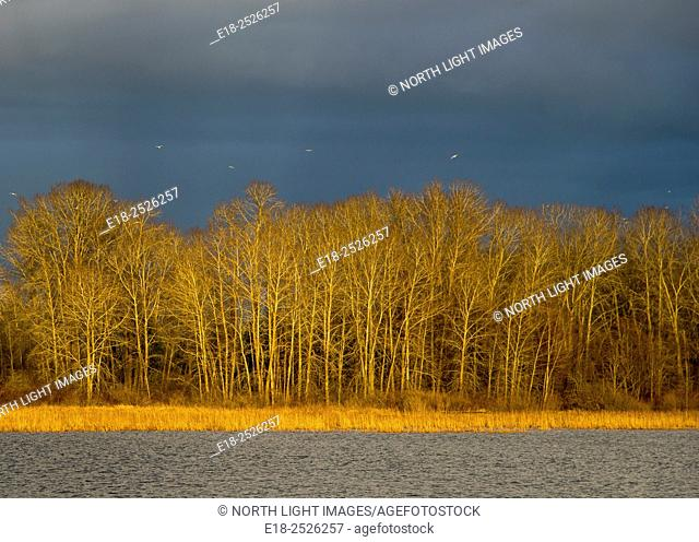 Canada, BC, Delta. Ladner marsh, viewed from float home on the Fraser River