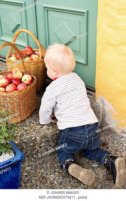 Small boy crawling to apple baskets