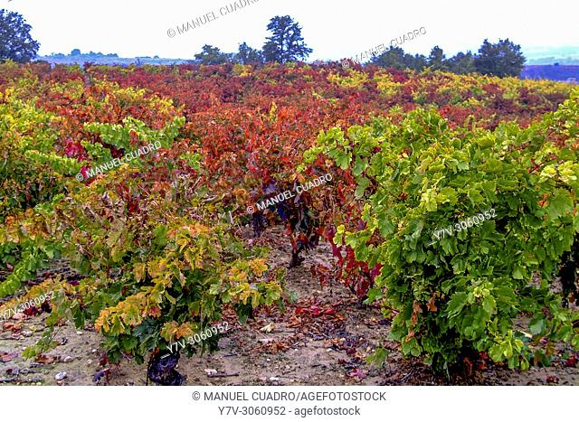 Autumn landscape. Vineyards in Leza and Navaridas area. La Rioja Alavesa, Basque Country, Spain