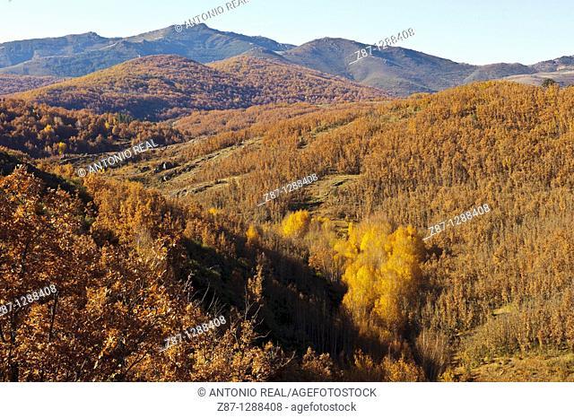 Valle del Rio Berbellido, Macizo del Pico del Lobo, Parque Natural Sierra Norte de Guadalajara, El Cardoso de la Sierra, Guadalajara, Spain