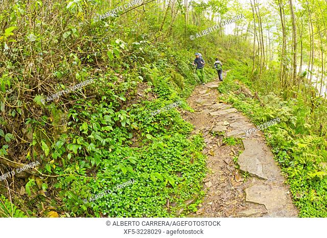 Hikkers on Route, Mountain Forest Footpath, Trek to Annapurna Base Camp, Annapurna Conservation Area, Himalaya, Nepal, Asia