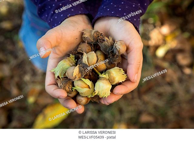 Little girl holding hazelnuts in her cupped hands