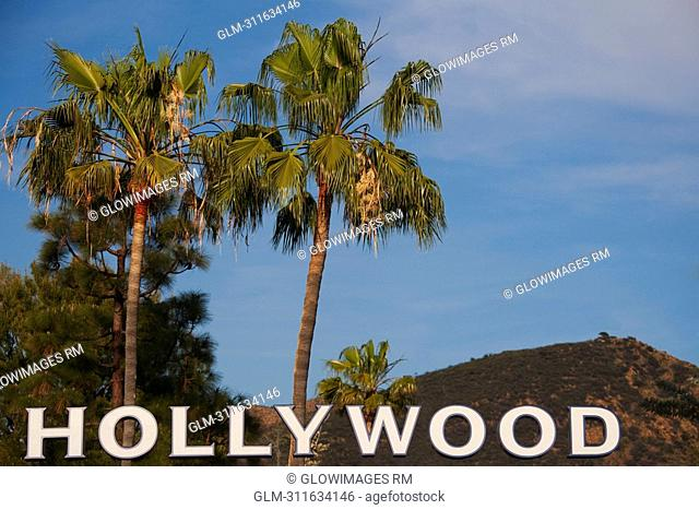 Hollywood text with palm trees in the background, Hollywood, Los Angeles, California, USA