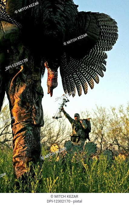Turkey Hunter Carrying Dead Turkey While Turkey Hunting