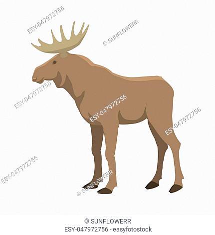 Elk illustration. Wild nature. Forest animal with horns. Flat isolated illustration on white background