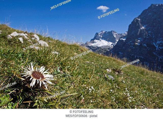 Austria, Tirol, Karwendel, Landscape