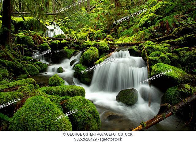 Side creek cascade along French Pete Creek Trail, Three Sisters Wilderness, Willamette National Forest, Oregon