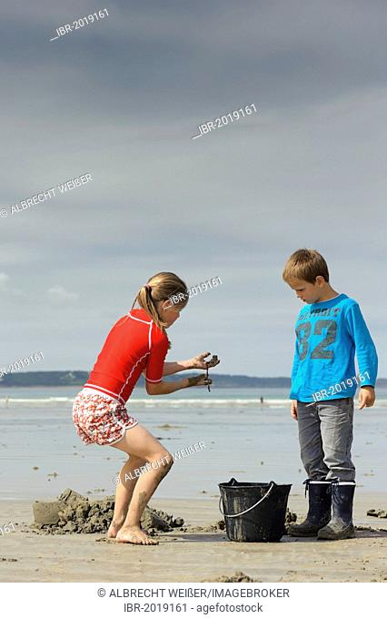 Young anglers digging for sandworms (Arenicola marina) on the beach, Atlantic Ocean, Finistere, Brittany, France, Europe, PublicGround