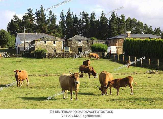 Farmhouse and cattle at Mañón, Coruña province, Galicia, Spain, Europe