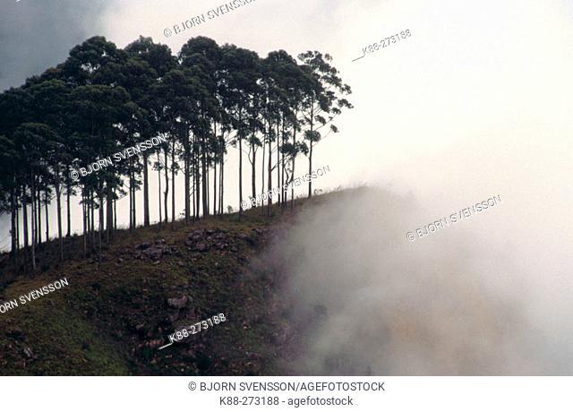 Mist shrouded forest. Ella. Sri Lanka
