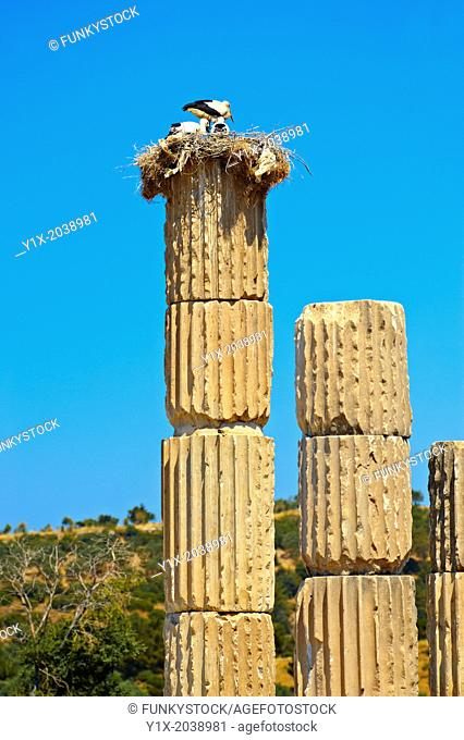 The Hellanistic Ionic columns of the Apollo Smintheion Sanctuary with Storks nesting ontop, near Gulpinar Village Turkey