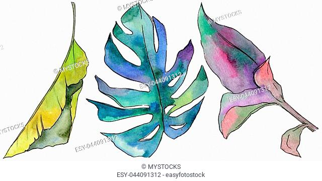 Tropical Hawaii leaves in a watercolor style isolated. Aquarelle wild flower for background, texture, wrapper pattern, frame or border