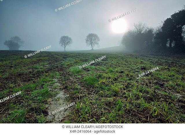 Lingering fog over a field in County Westmeath, Ireland