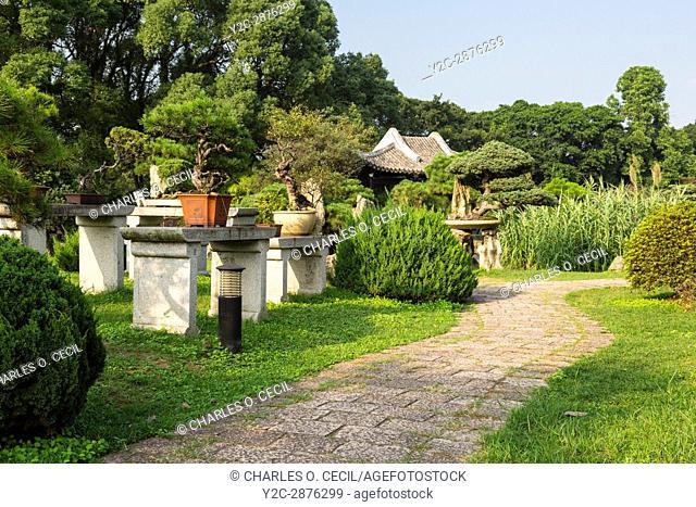 Wenzhou, Zhejiang, China. Jiangxin Island, Bonsai Garden