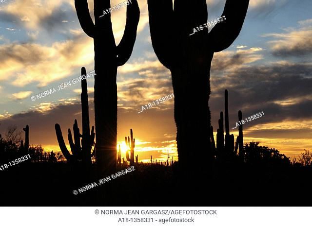 Ironwood Forest National Monument at sunset near Marana, Arizona, USA, in the Sonoran Desert