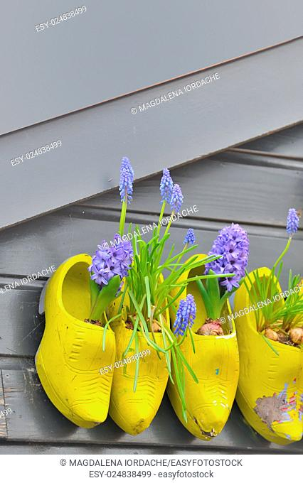 Traditional national wooden shoes Klomp like flowerpots with flowers